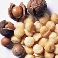 High Quality Grade macadamia nuts