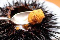 Sea Urchin for sale
