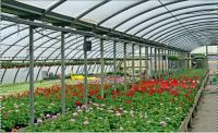 Flower Greenhouse Film