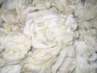 White Wool (scoured ) tannery or clipped