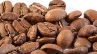 Premium Robusta coffee beans for export at best prices