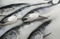 Premium quality Frozen/Fresh fish  for exportation