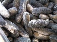 Premium quality sea cucumber for exportation