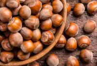 Top Quality Grade A Hazel Nuts for exportation