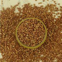 Hot Organic Dried Roasted Buckwheat  Wholesale price