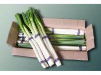 Fresh New Crop Long Shape Fresh Scallion WholeSale Price