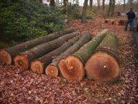 Red Oak Logs