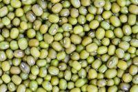 Green  3.6mm up / Green Mung Bean/ Green Moong Beans