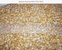Yellow Corn For Animal Feed NON GMO