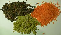 Red, Green Whole and Split Lentils