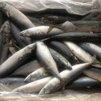 Ice Cold Frozen Salmon Fish, Atlantic Frozen Salmon /Horse Mackerel Fish