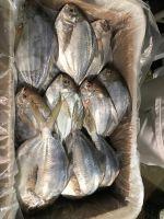 Frozen Butterfish - Peprilus Paru