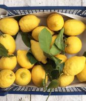 Fresh Lemons, Eureka Lemons, seedless lemon, fresh lime, Adalia, Verna, Oranges, Mandarin, Tangerine, Citrus fruits