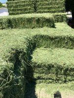 alfalfa hay, alfalfa hay, animal feed, alfalfa bales, pellet, animal meal, cattle, livestock, heifer, cow, goat, sheep meal