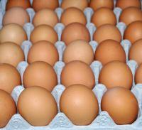 Brown Shells Chicken Fresh Table Eggs, white, hen, fowl, cock, omellete, Fertile hatching eggs, Chickens, frozen chicken