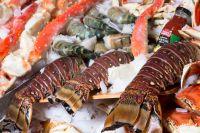 Sea food, horse, Tuna fish, Shell, Squid, snails, Abalone Oysters, Tilapia, Angler, Mackerel, Bonito, Tuna, Sardine Fish, crabs, prawns