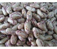 High quality Light Speckled Kidney Beans / Pinto Beans / Sugar Beans