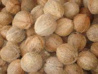 Fresh Coconuts