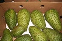 High Quality Soursop Fruits for Sale