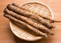 High Quality Fresh Burdock At Workable Prices