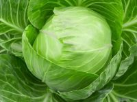 Good Price Cabbage Fresh Letture for Sale