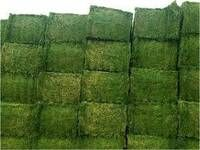 Premium Alfalfa Hay, Rhodes Grass, Oats Hay Ready / Oats Hay Animal Feed for Sale