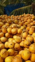 Refined coconut oil(RBD coconut oil), coconut cooking oil, coconut oil