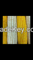 CORN AT A VERY GOOD PRICES.