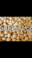 BEST SOYBEAN QUALITY