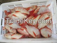 Fresh Water Red Tilapia fish