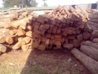 AFRICAN WOOD