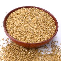 new crop red/ yellow millet for animal food feed