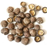Chinese shiitake dried magical shiitake mushroom