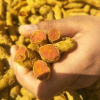 Turmeric fingers, new crop 2020 with good price