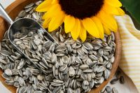 sunflower seeds type5009 market price
