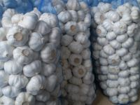 Grade AA+Pure Top Quality Natural Fresh White Garlic