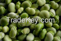 Black good price broad bean