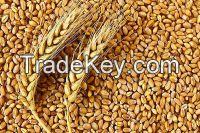 Organic Feed Wheat