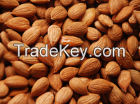Dried Blanched  Apricot Kernels