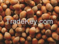 Raw Natural Roasted and 100% Organic whole hazelnuts fresh