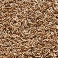 100% Natural and Pure Rye Grain
