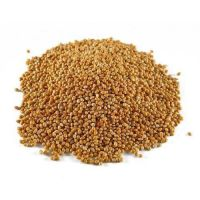 Best Quality Sorghum At Affordable Price