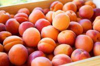 Best taste fresh apricot