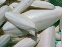 Dried Cuttlefish Bone