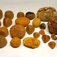 Whole Cow/Ox Gallstones