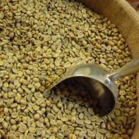 Arabica Coffee Beans For Sale