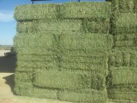 high quality alfalfa hay, alfalfa hay price, alfalfa hay bales