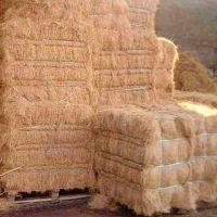 Cheapest price Coconut fiber/ Coconut coir fiber price