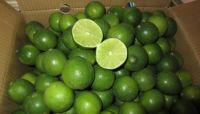 Fresh Lime/Citrus