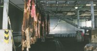 Sell wet salted cattle hides